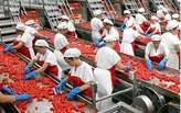 Personnel Pour Usine De Fabrication De Tomate Patte  - Côte d'Ivoire