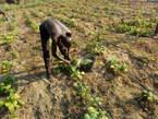 Agriculture Cle en Main - Côte d'Ivoire