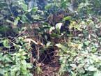 Terrain 100 Hectares De Forêt À Vendre À Daoukro en Bordure Du Fleuve Comoé - Côte d'Ivoire