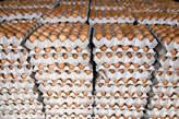 Vente 'œuf en Gros Et Détail - Côte d'Ivoire