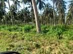 Terrain De 3 Hectares Avec Acd Sortir en Vente Sur La Nouvelle Voie De Bassam - Côte d'Ivoire