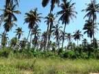 Terrain à vendre (500 m2) - Côte d'Ivoire