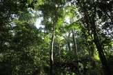 Vente DE forêt Vierge - Côte d'Ivoire