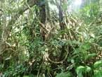 Parcelle De 05 Ha  a Bonoua - Côte d'Ivoire