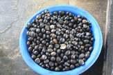 Vente d'amande de de noix de palmiste - Côte d'Ivoire