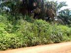 Terrain De 3000m2 a Vendre Pour Habitation Directe - Cameroun