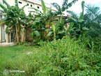 Terrain titres a vendre a logbessou bien places. 50m du laxe lour de la route de pk 14 - Cameroun