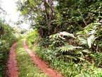 Terrain Plat a Vendre a Nkoloman - Cameroun