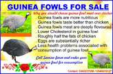 Matured guinea fowls for sale - Ghana