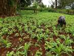 1½ Acre Land for Sale in Nandi - Kenya