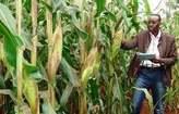 KITALE KAPLAMAI 15 ACRES FOR SALE. - Kenya