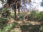 0.5 Acres Prime Plot In Old Kitisuru - Kenya