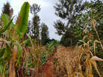 MWEA OFFER PLOTS‼️ - Kenya