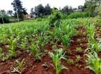 1 Acre plot for sale in New Kitisuru - Kenya