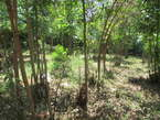 1/4 Acre Prime Plot For Sale in Wangige - Kenya