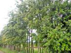 Nyahururu Gardens - Kenya