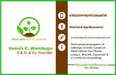 Professional Graphic Design Services  - Kenya