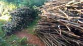 stakes - Kenya