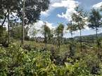 50 by 100 Kiserian Plot for Sale - Kenya