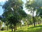 Prime 2.8 Ha Vipingo Centum in kadzinuni - Kenya