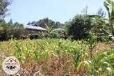 80*100 residential plot located at Ha. Thiru - Kenya