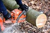 Tree Care Services - Kenya