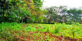 1/2 an Acre of Prime Land in Njathaini - Kenya
