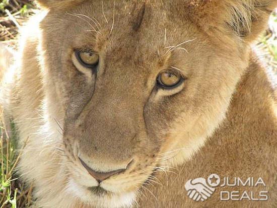 masai mara safaris trips tours budget holiday kenya cbd