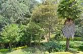 Modern Four bedroom townhouse in Rosslyn. - Kenya