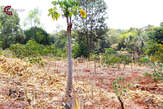 Thigiri Ridge 0.5 Acers for Sale in Thigiri - Kenya