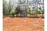 3 Acres: Kirinyaga: Kimbimbi - Kenya