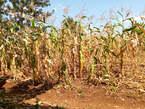 Plots in Kenol - Kenya