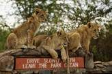 1 Day Nairobi National Park Tour - Kenya