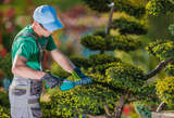 Entretien jardin à Agadir - Maroc