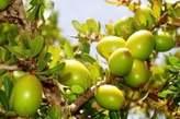 Huile D'argan Alimentaire Et Cosmétique - Maroc