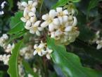 Fiermada Jeunes Plantes - Madagascar