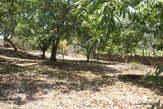 VENTE 9 TERRAINS - Majunga(Madagascar) - Madagascar