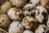 Ovos de Codorniz *quail Eggs* - Moçambique