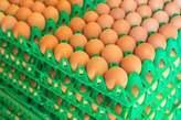 Egg  - Nigeria