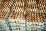 Eggs  - Nigeria