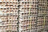 Crates of Egg  - Nigeria