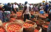 tomatoes for sale  - Nigeria