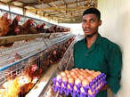 FRESH eggs from the farm for sales - Nigeria