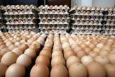Fresh Jumbo  Egg  for Sale  - Nigeria