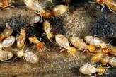 Termite/Ants Fumigation Services - Nigeria