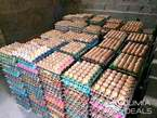 Bulk Supply Crates of Eggs at Affordable Price - Nigeria