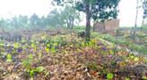 Land - Nigeria