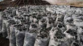 Bags of charcoal is available for sales - Nigeria