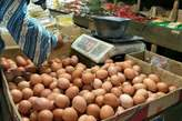 Fresh farm eggs available - Nigeria