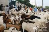 Sallah rams for sale - Nigeria